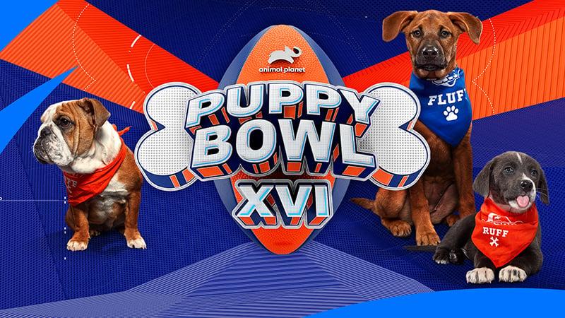PuppyBowl_Season_16_HORIZ_800w